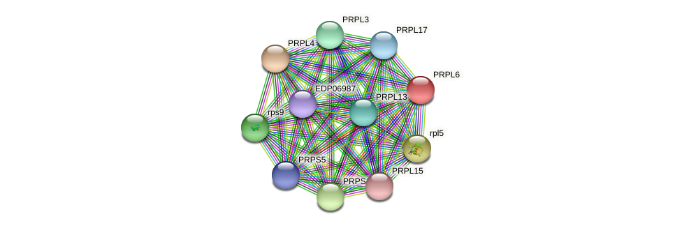 PRPL6 protein (Chlamydomonas reinhardtii) - STRING interaction network