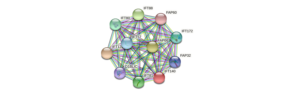 IFT140 protein (Chlamydomonas reinhardtii) - STRING interaction network