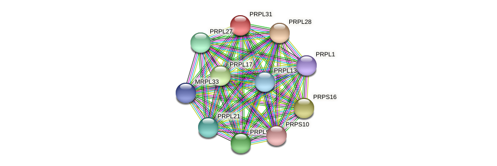 PRPL31 protein (Chlamydomonas reinhardtii) - STRING interaction network