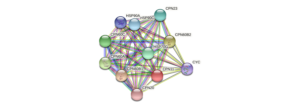 CPN11 protein (Chlamydomonas reinhardtii) - STRING interaction network