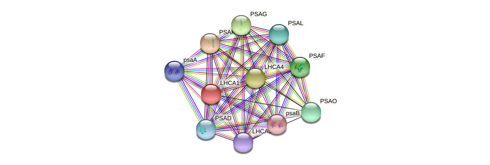 LHCA1 protein (Chlamydomonas reinhardtii) - STRING interaction network