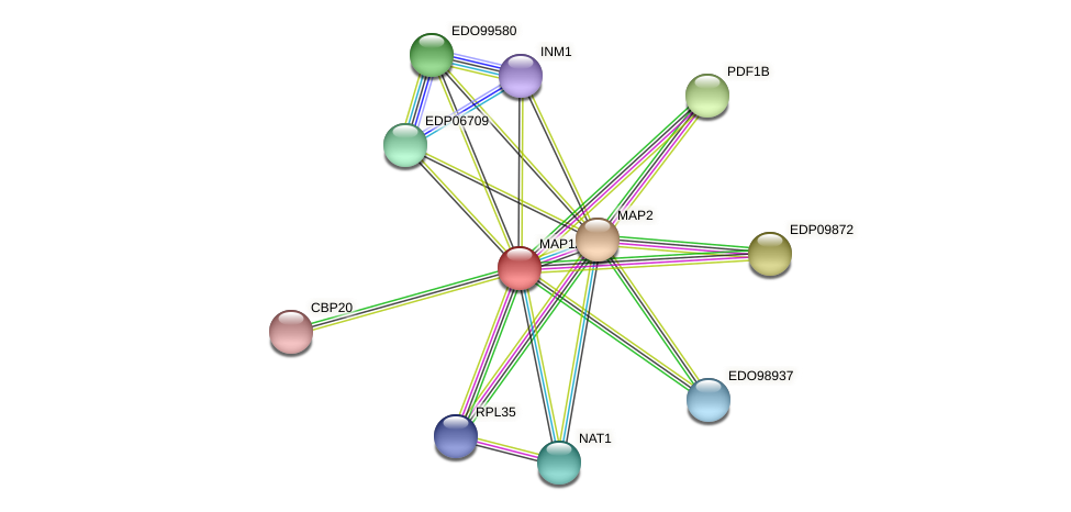 MAP1A protein (Chlamydomonas reinhardtii) - STRING interaction network