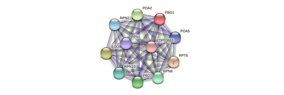 PBG1 protein (Chlamydomonas reinhardtii) - STRING interaction network