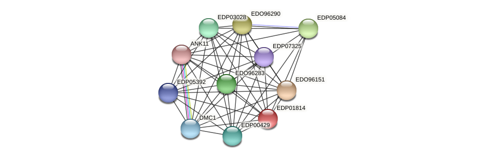 EDP01814 protein (Chlamydomonas reinhardtii) - STRING interaction network