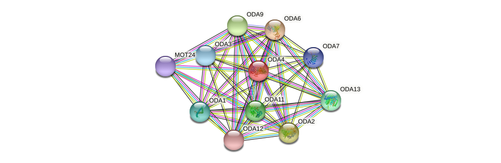 ODA4 protein (Chlamydomonas reinhardtii) - STRING interaction network