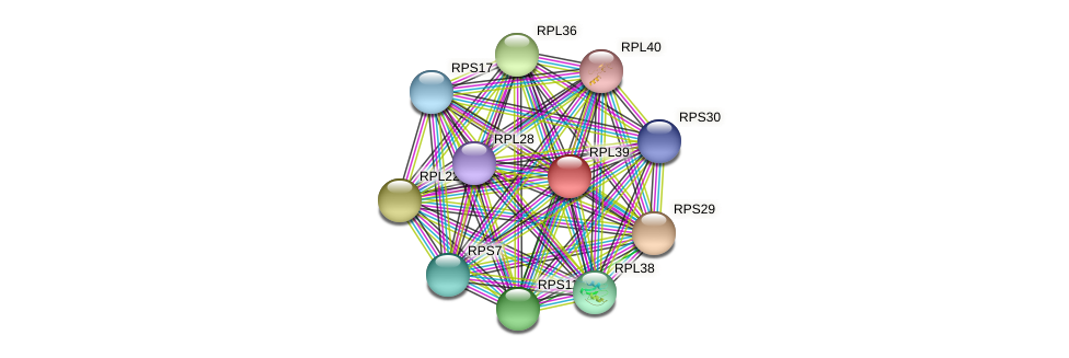 RPL39 protein (Chlamydomonas reinhardtii) - STRING interaction network