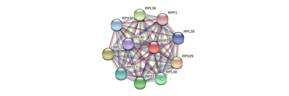 RPP2 protein (Chlamydomonas reinhardtii) - STRING interaction network