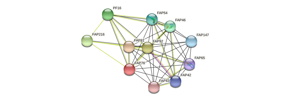 FAP76 protein (Chlamydomonas reinhardtii) - STRING interaction network