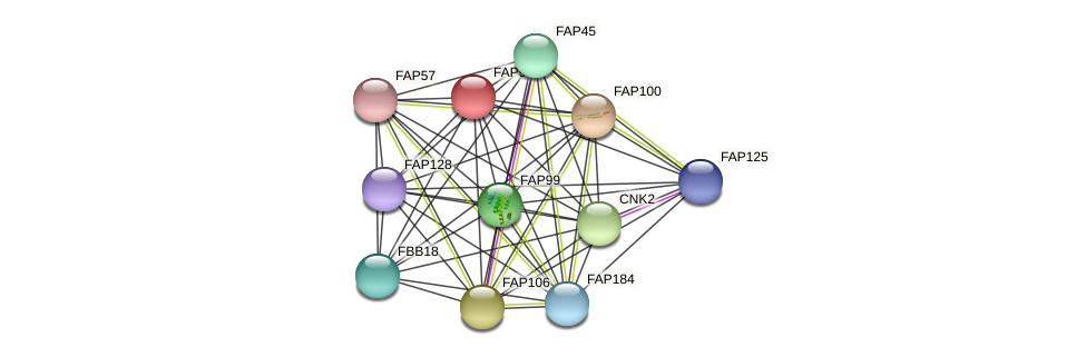 FAP93 protein (Chlamydomonas reinhardtii) - STRING interaction network