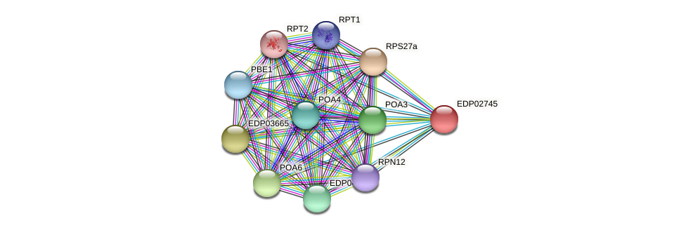 EDP02745 protein (Chlamydomonas reinhardtii) - STRING interaction network