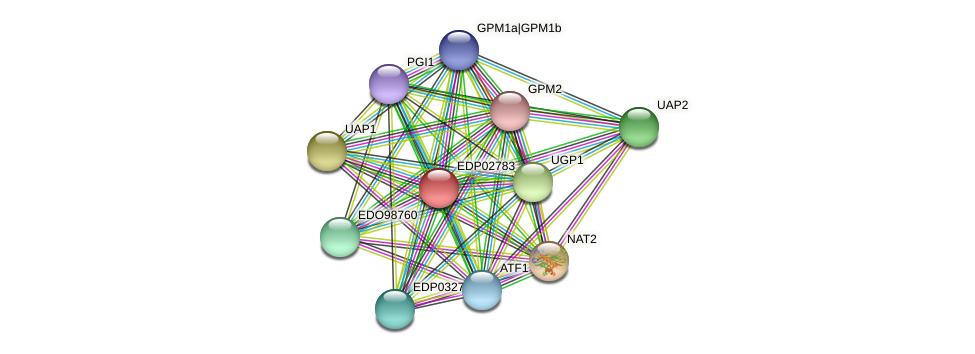 EDP02783 protein (Chlamydomonas reinhardtii) - STRING interaction network
