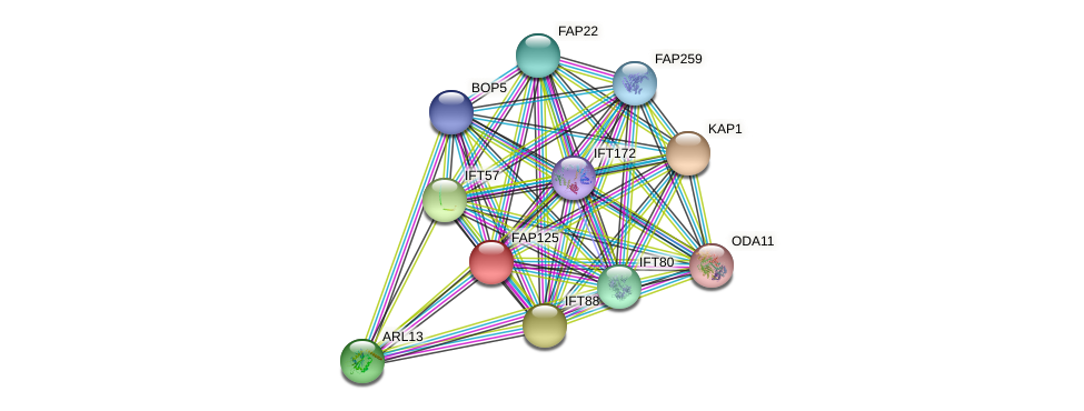 FAP125 protein (Chlamydomonas reinhardtii) - STRING interaction network