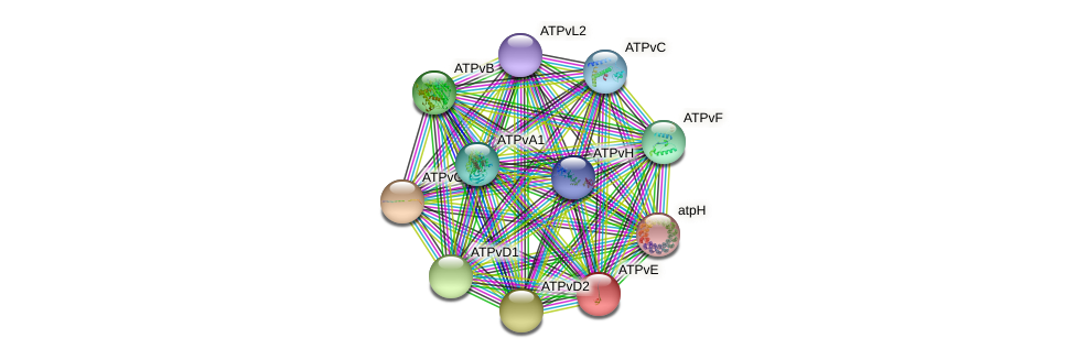 ATPvE protein (Chlamydomonas reinhardtii) - STRING interaction network