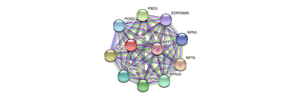RPN9 protein (Chlamydomonas reinhardtii) - STRING interaction network