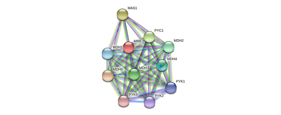 MME3 protein (Chlamydomonas reinhardtii) - STRING interaction network