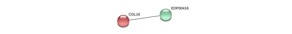 CGL16 protein (Chlamydomonas reinhardtii) - STRING interaction network
