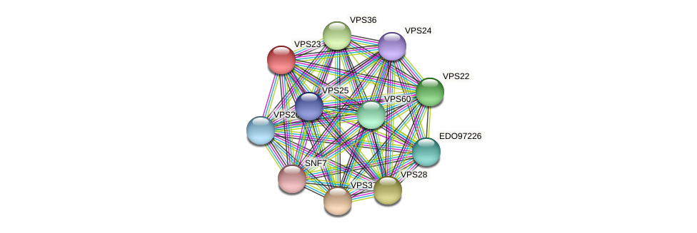 VPS23 protein (Chlamydomonas reinhardtii) - STRING interaction network