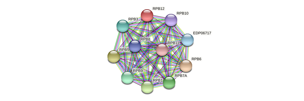 RPB12 protein (Chlamydomonas reinhardtii) - STRING interaction network