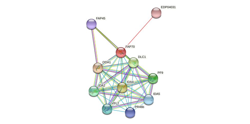 FAP70 protein (Chlamydomonas reinhardtii) - STRING interaction network