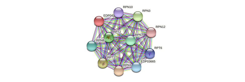 EDP04298 protein (Chlamydomonas reinhardtii) - STRING interaction network
