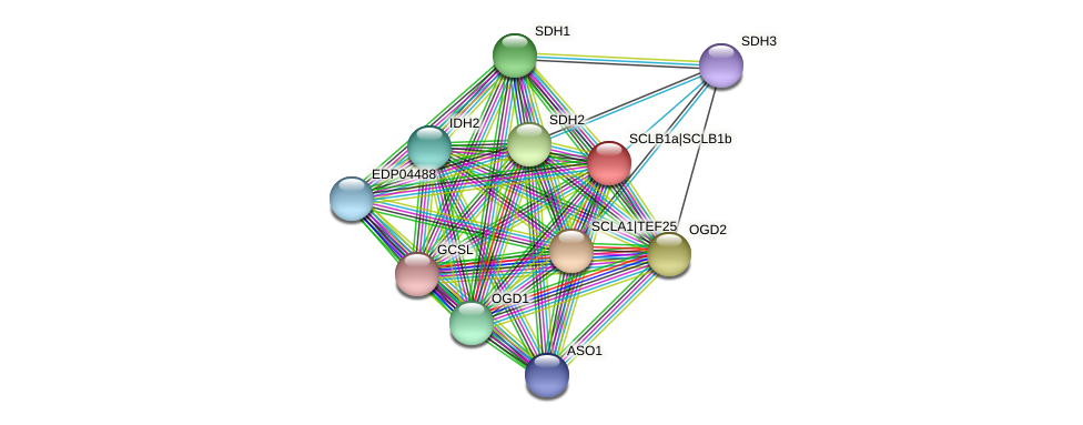 SCLB1a protein (Chlamydomonas reinhardtii) - STRING interaction network