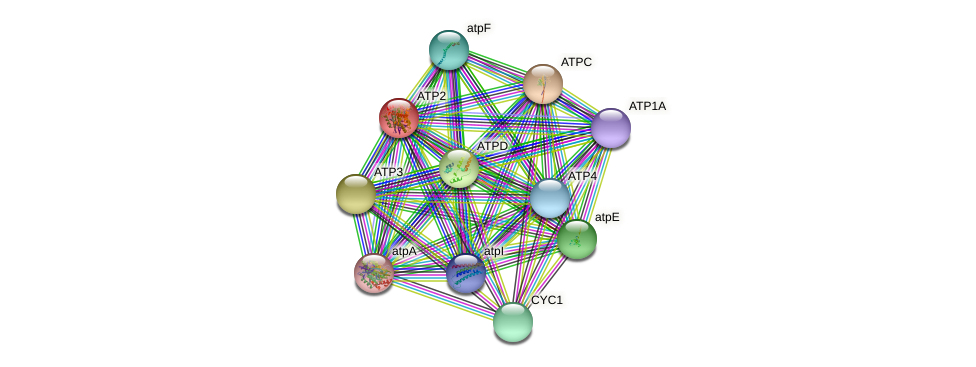 ATP2 protein (Chlamydomonas reinhardtii) - STRING interaction network