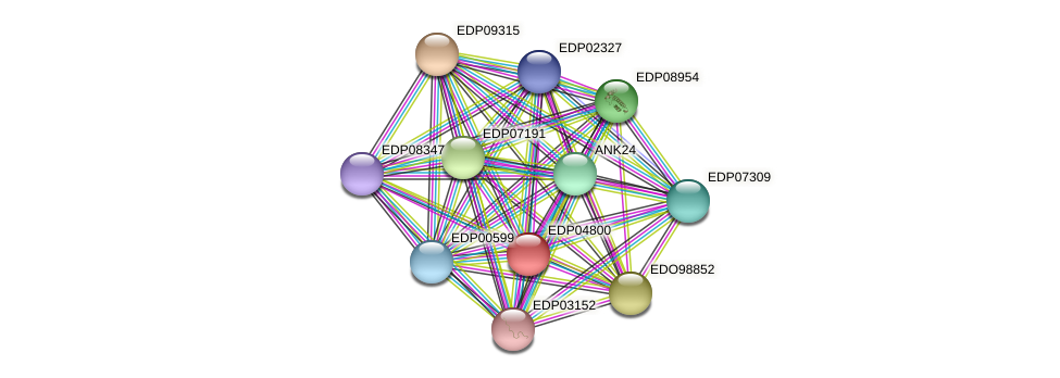 EDP04800 protein (Chlamydomonas reinhardtii) - STRING interaction network
