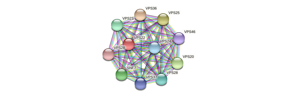 VPS22 protein (Chlamydomonas reinhardtii) - STRING interaction network