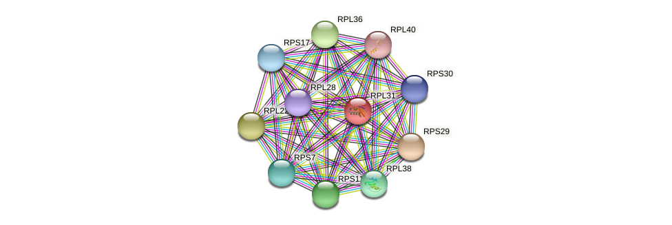 RPL31 protein (Chlamydomonas reinhardtii) - STRING interaction network