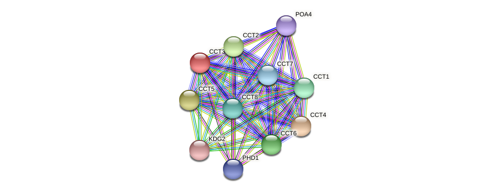 CCT3 protein (Chlamydomonas reinhardtii) - STRING interaction network