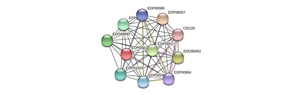 EDP05813 protein (Chlamydomonas reinhardtii) - STRING interaction network