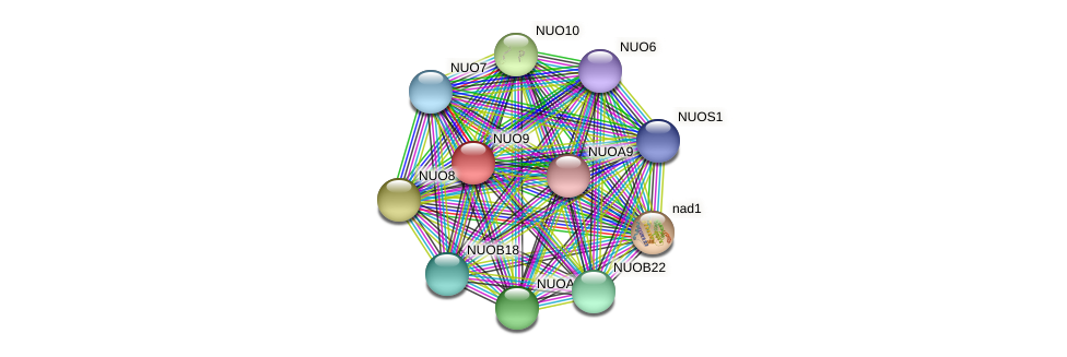 NUO9 protein (Chlamydomonas reinhardtii) - STRING interaction network