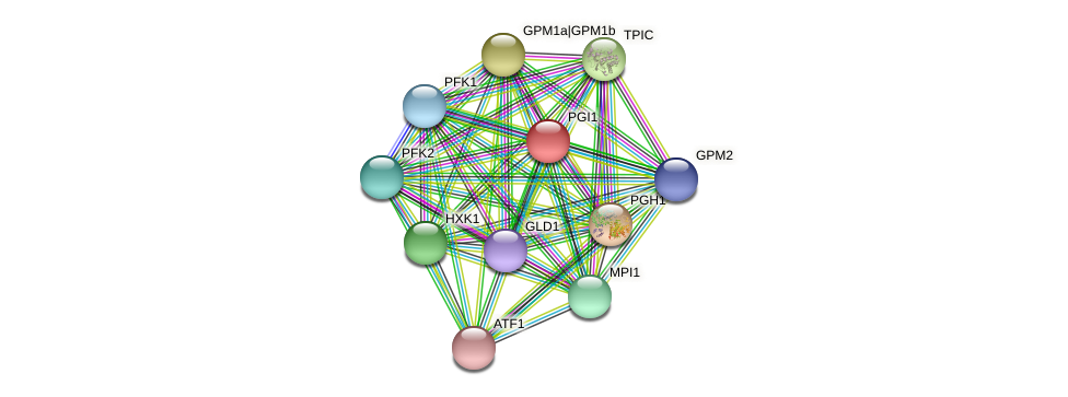PGI1 protein (Chlamydomonas reinhardtii) - STRING interaction network