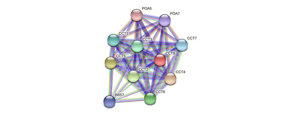 CCT8 protein (Chlamydomonas reinhardtii) - STRING interaction network