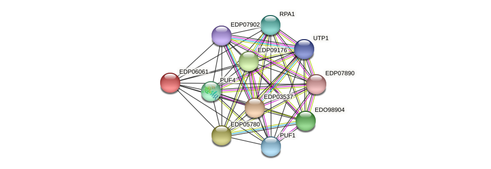 EDP06061 protein (Chlamydomonas reinhardtii) - STRING interaction network