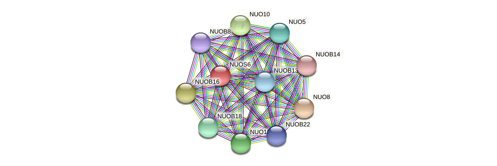 NUOS6 protein (Chlamydomonas reinhardtii) - STRING interaction network