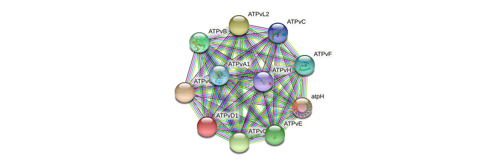 ATPvD1 protein (Chlamydomonas reinhardtii) - STRING interaction network