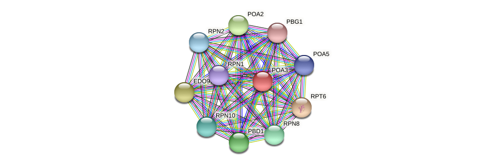POA3 protein (Chlamydomonas reinhardtii) - STRING interaction network