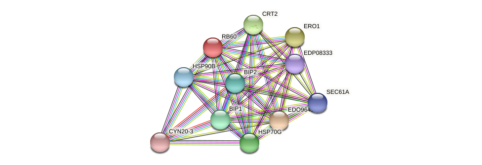 RB60 protein (Chlamydomonas reinhardtii) - STRING interaction network