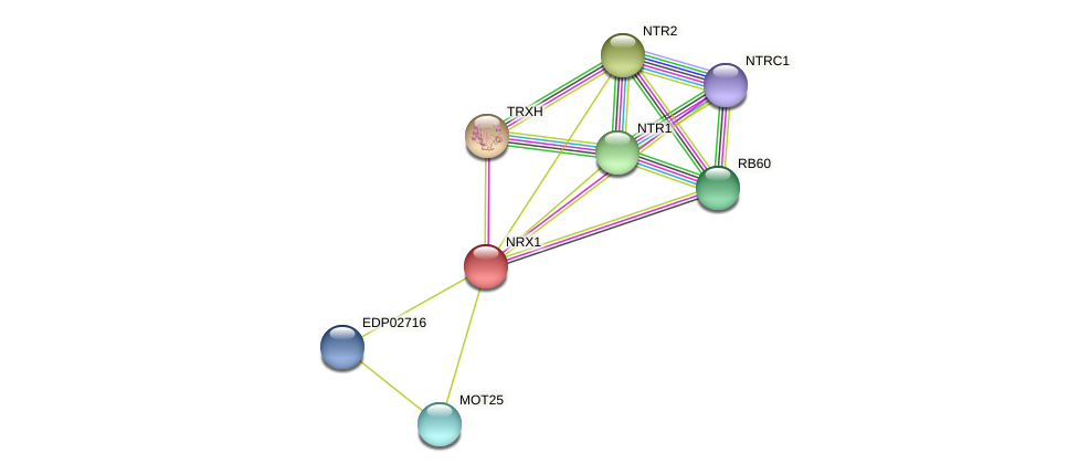 NRX1 protein (Chlamydomonas reinhardtii) - STRING interaction network