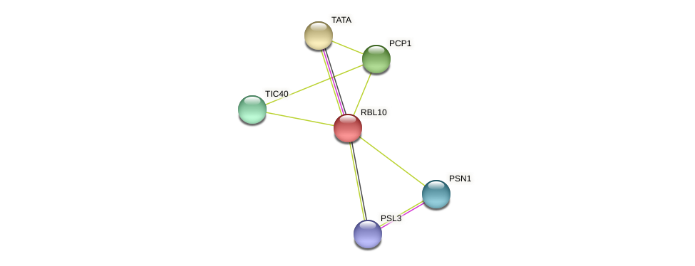 RBL10 protein (Chlamydomonas reinhardtii) - STRING interaction network