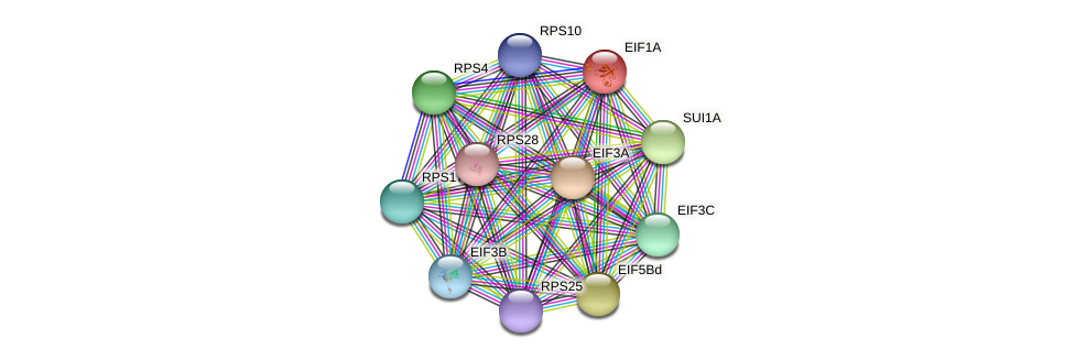 EIF1A protein (Chlamydomonas reinhardtii) - STRING interaction network