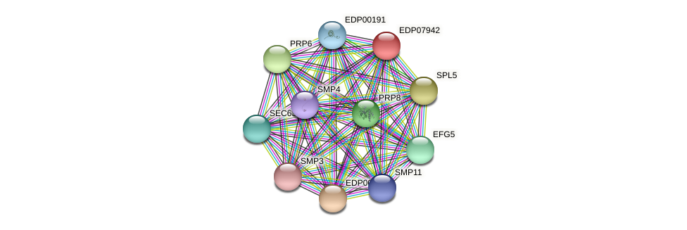 EDP07942 protein (Chlamydomonas reinhardtii) - STRING interaction network