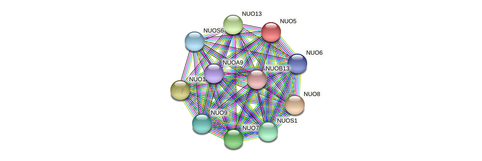 NUO5 protein (Chlamydomonas reinhardtii) - STRING interaction network