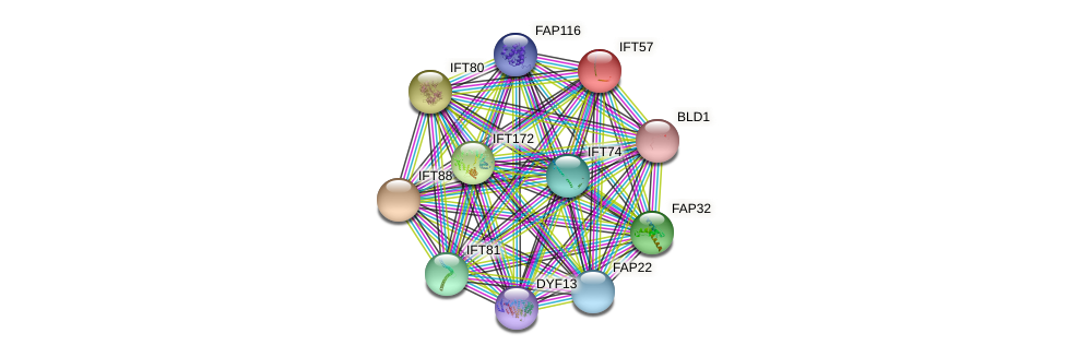 IFT57 protein (Chlamydomonas reinhardtii) - STRING interaction network