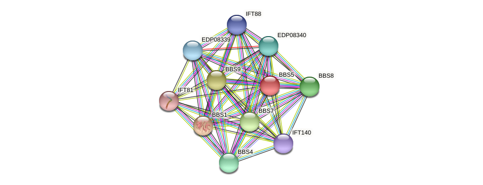 BBS5 protein (Chlamydomonas reinhardtii) - STRING interaction network