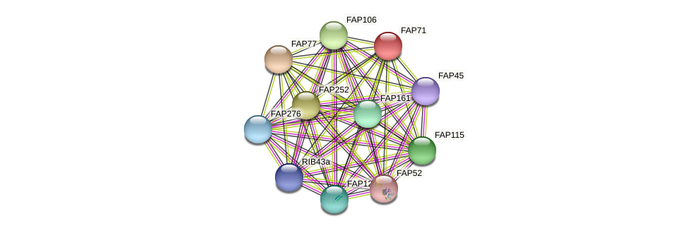 FAP71 protein (Chlamydomonas reinhardtii) - STRING interaction network