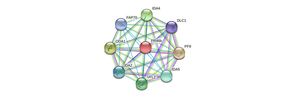PR46b protein (Chlamydomonas reinhardtii) - STRING interaction network