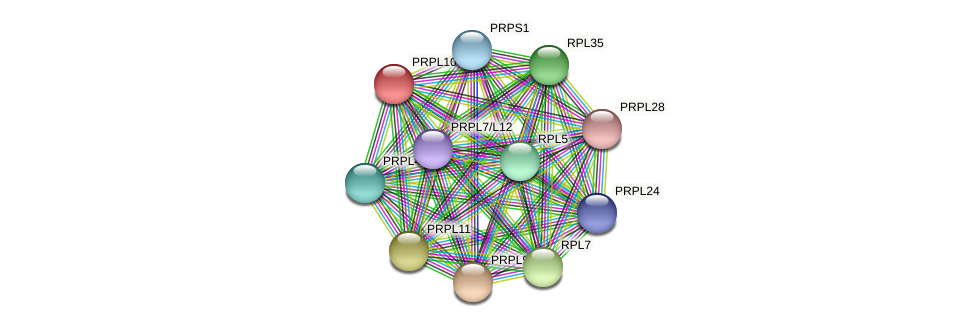 PRPL10 protein (Chlamydomonas reinhardtii) - STRING interaction network