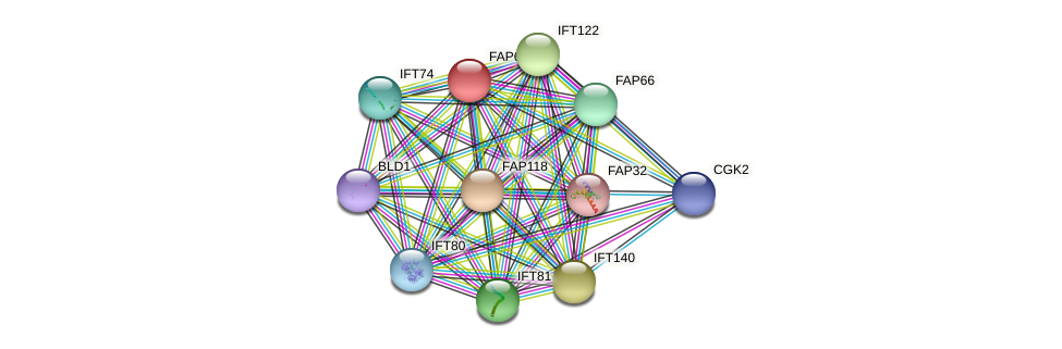FAP60 protein (Chlamydomonas reinhardtii) - STRING interaction network